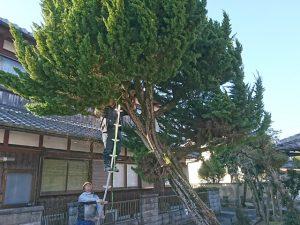 個人宅工事 伐採